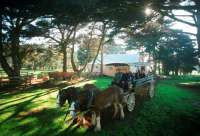 Take a horse and cart ride around the historic Churchill Island homestead.