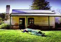 The Churchill Island historic homestead to visit when on Phillip Island.