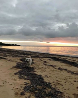 Our puppy Wilson enjoying an evening run on the beach!.